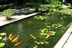 Koi Garden 02. Koi pond with lots of big Koi swimming around. This was taken in Stellenbosh in South Africa Stock Images