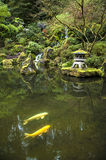 Koi in a garden pond Stock Image