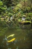 Koi i ett trädgårds- damm Fotografering för Bildbyråer