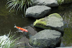 Koi in Japanese tea house pond stock photography