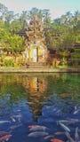 Koi n tempel Arkivbilder