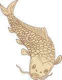 Koi Nishikigoi Carp Diving Down Drawing. Drawing sketch style illustration of a trout fish diving down viewed from the front set on  white background Stock Photos