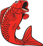 Koi Nishikigoi Carp Fish Jumping Cartoon Royalty Free Stock Image