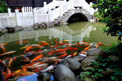 Koi in the pond Stock Photos