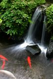 Koi Pond 3. A Stream in a Garden with a Pondful of Fish stock image