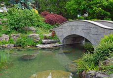 Koi Pond Stock Afbeeldingen