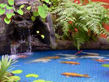 Koi Pond. Gold and white koi swim in a blue tile pond.  Green foliage and a stone waterfall in background, with an orange wall minimally shown Royalty Free Stock Photography