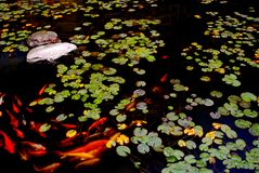 Koi pond Stock Photos