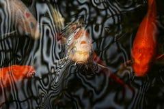 Koi Pond con la textura flúida foto de archivo