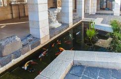 Koi Pond con los pescados coloridos de las carpas de Japón Foto de archivo