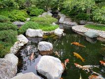 Free  Koi Pond Design In Japanese Friendship Garden Balboa Park San Diego Stock Photos - 149738633