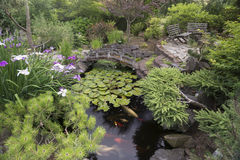Koi Pond Garden Stock Photos