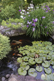 Koi Pond with Irises Stock Photography