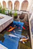 Koi Pond med Japan färgrika karpfiskar Arkivbild