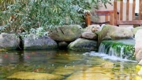Koi pond waterfall in garden stock footage