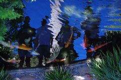 Koi Pond With Reflections Of People Stock Photos