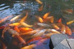 Koi Pond stock photography