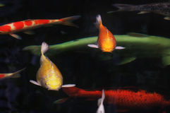 Koi ryba lub karp ryba zdjęcie royalty free