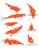 Koi ryba pomarańcze set ilustracja wektor