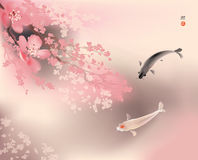 Koi and spring sacura Stock Photography
