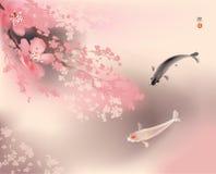 Koi and spring sacura Stock Photography