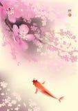 Koi and spring sacura Royalty Free Stock Photos