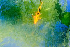 Koi swimming in a pond Stock Image