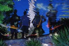 Koi-Teich mit Reflexionen von Leuten stockfotos