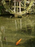 Koi and waterwheel. Waterwheel in Kyoto with Koi fish swimming in pond Stock Images