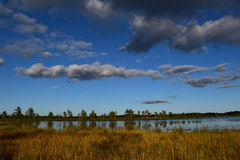 Koigi bog in Saaremaa, Estonia. Beautiful Koigi bog with a lake in Saaremaa, Estonia Stock Photography