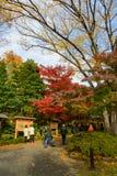 Koishikawa后乐园庭院在秋天在东京 图库摄影
