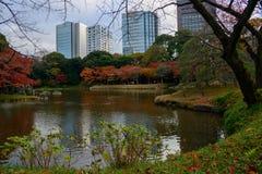 Koishikawa后乐园庭院在秋天在东京 库存照片