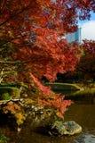 Koishikawa后乐园庭院在秋天在东京 免版税库存图片