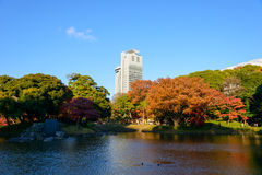 Koishikawa后乐园庭院在秋天在东京 库存图片