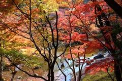 Koishikawa Korakuen Garden royalty free stock photo