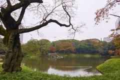 Koishikawa Korakuen Garden Stock Images