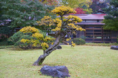 Koishikawa Korakuen Garden Royalty Free Stock Photography