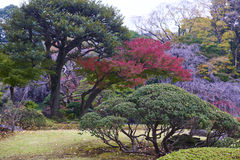 Koishikawa Korakuen Garden royalty free stock images