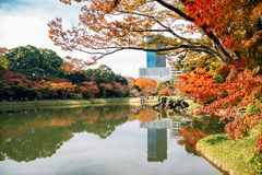 Koishikawa Korakuen Garden with autumn maple in Tokyo, Japan royalty free stock photos