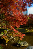 Koishikawa Korakuen Garden in Autumn in Tokyo Royalty Free Stock Images