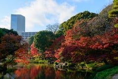Koishikawa Korakuen Garden in Autumn in Tokyo stock photos