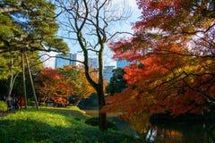 Koishikawa Korakuen Garden in Autumn in Tokyo royalty free stock photos