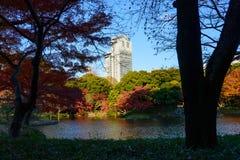Koishikawa Korakuen Garden in Autumn in Tokyo royalty free stock photo