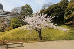 Koishikawa Korakuen Garden at spring stock images