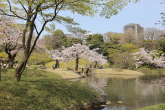 Koishikawa Korakuen Garden at spring Royalty Free Stock Images
