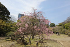 Koishikawa Korakuen Garden at spring Royalty Free Stock Photos
