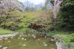 The Koishikawa Korakuen Garden Royalty Free Stock Photography