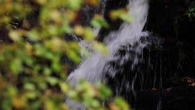 Kojący, uspokaja siklawę podczas Września w Szkocja Nawadnia życie zdjęcie wideo