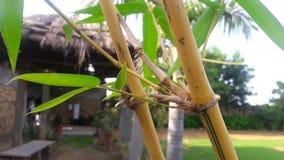 Koja för gräs för bladbambuträd Royaltyfria Foton