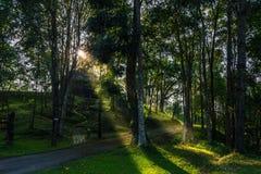 Koja i skogen Royaltyfria Bilder